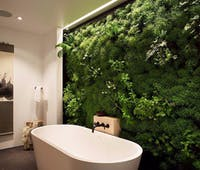 Plants for your bathroom